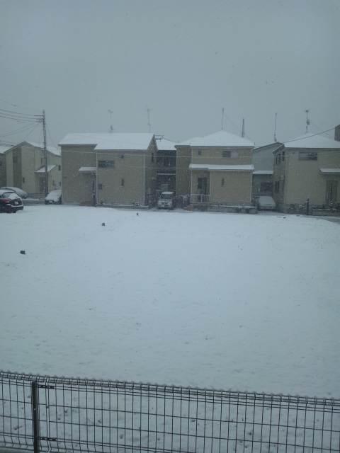 大雪だね〜♪