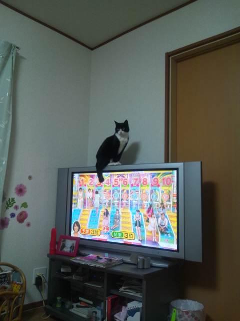 久しぶりにうちのネコたち♪(^-^)/